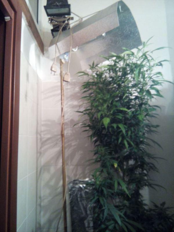Carovigno carovigno coltivavano piante di marijuana in una serra artigianale - Piante in bagno ...