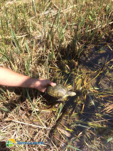 Ambiente tartaruga di palude salvata da for Tartaruga di palude